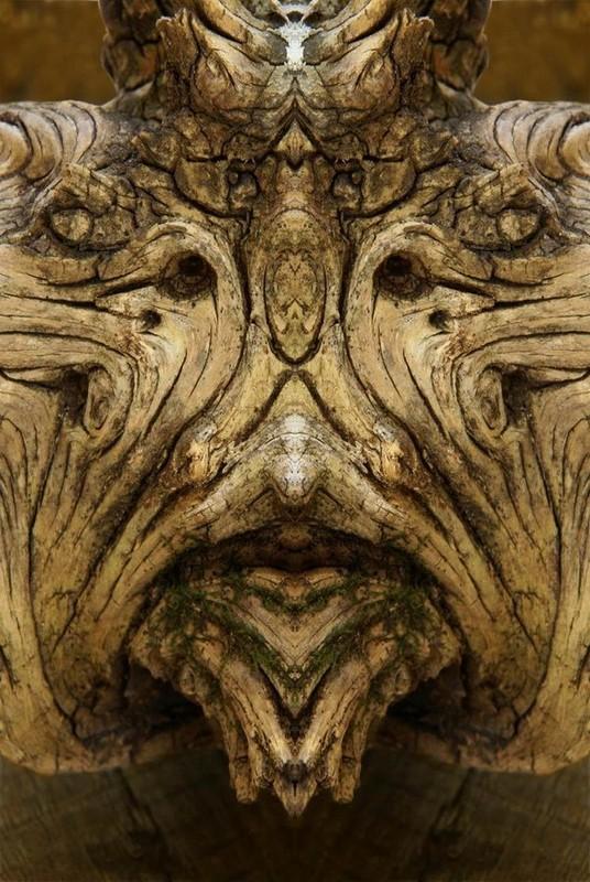 Симметрия дерева