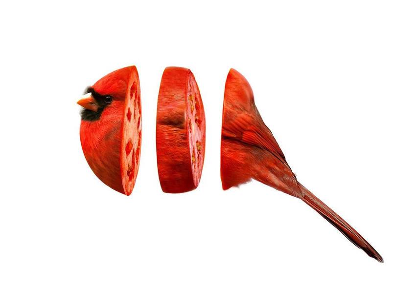 Если скрестить животных с фруктами и овощами