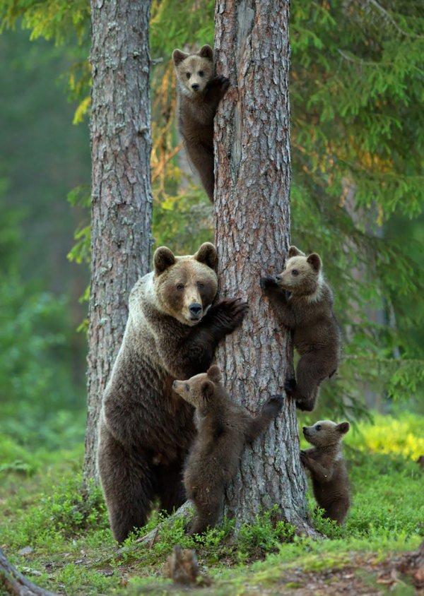 Крепкие семьи животных