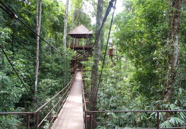 Мост над лесом