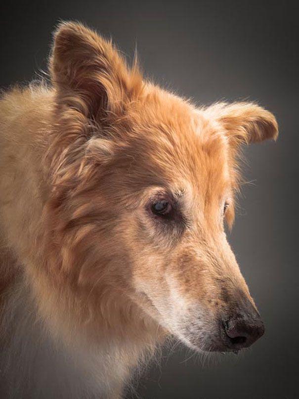 Собаки в преклонном возрасте
