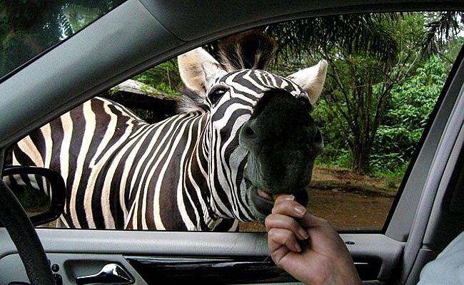 Животные умеют просить