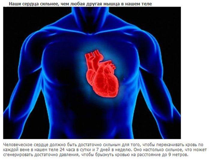 20 интересных фактов о нашем теле