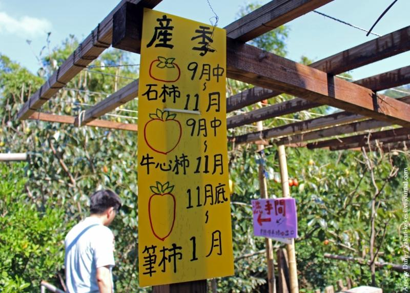 Как на Тайване сушат хурму