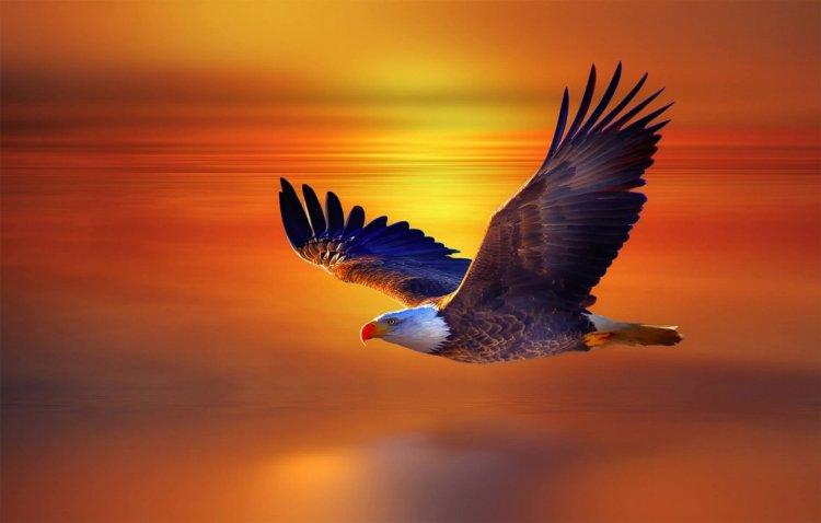 Птицы от фотографа Хосепа Сумалла