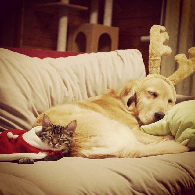 Приемный котенок и его новая мама