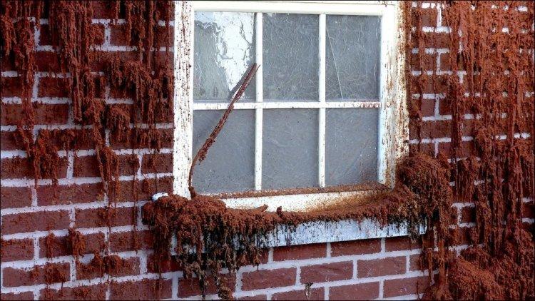 Тающий дом из воска