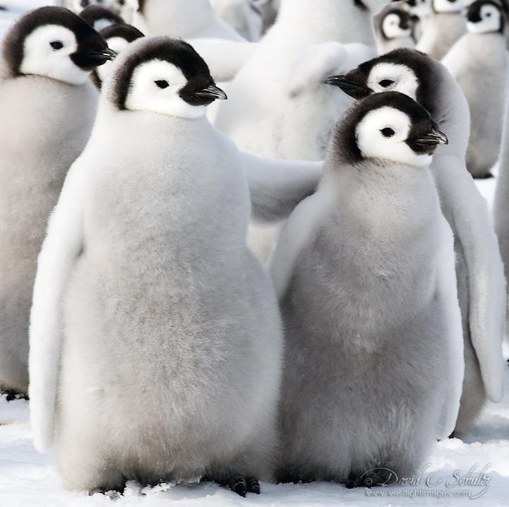 Животные тоже любят снег
