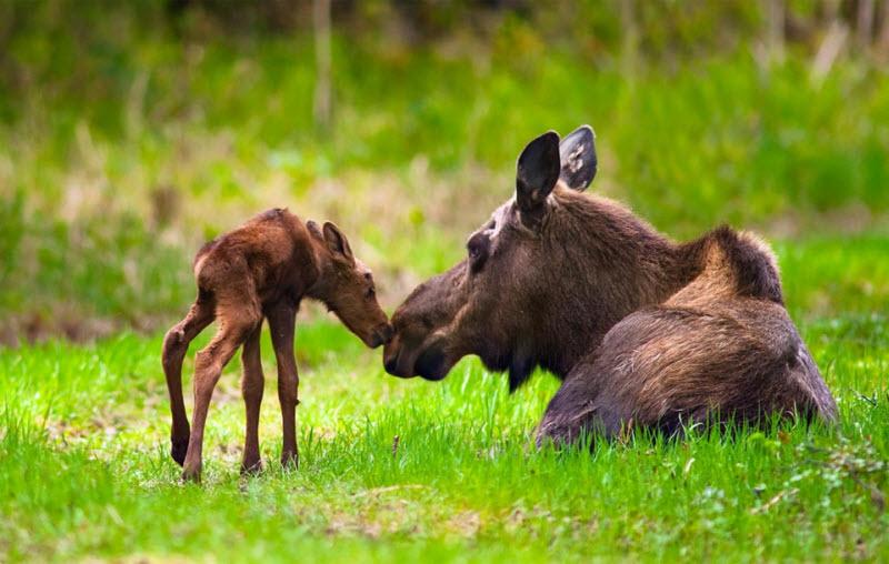 Красота природы Аляски