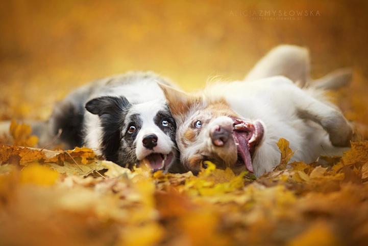 Милые фото собак