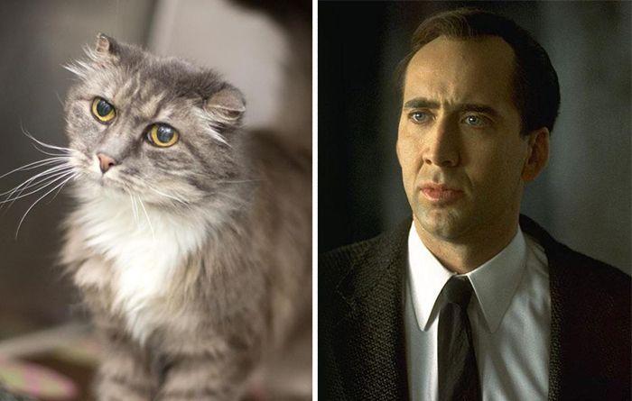 Коты, похожие на знаменитостей