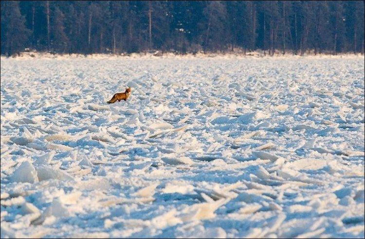 Блинчатый лед