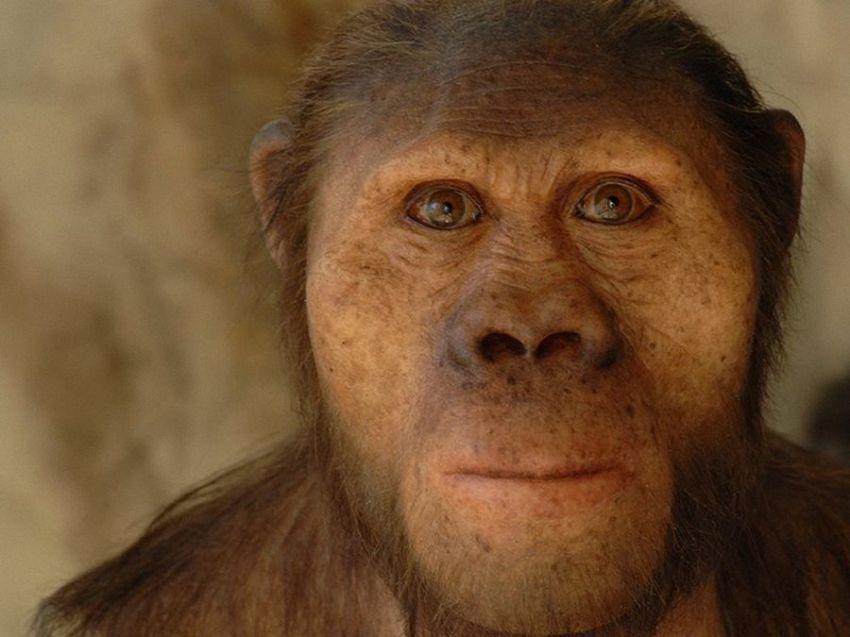 Наши предки, которые жили миллионы лет назад