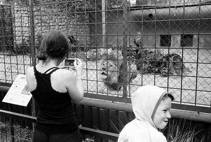 Фото из зоопарков разных стран мира