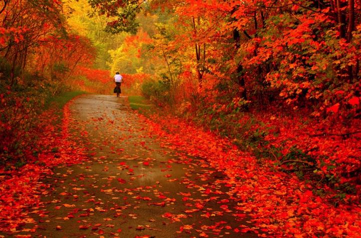 Яркие краски уходящей осени