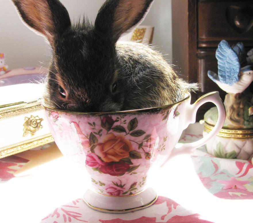 Немного ми-ми-мишности в каждую чашку