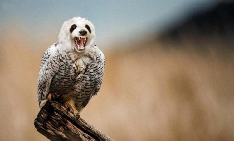 Фантастические гибриды животных