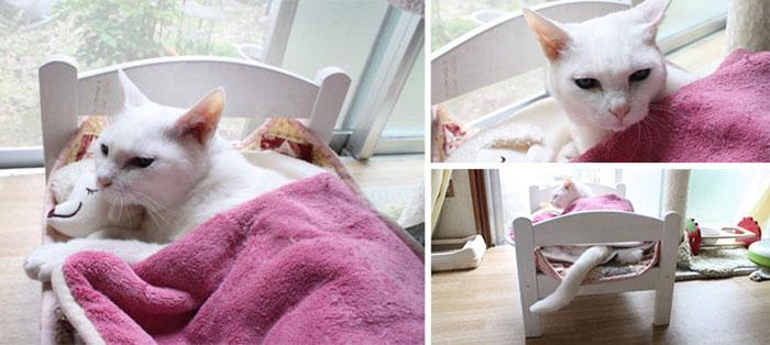 Коты на кроватках для кукол
