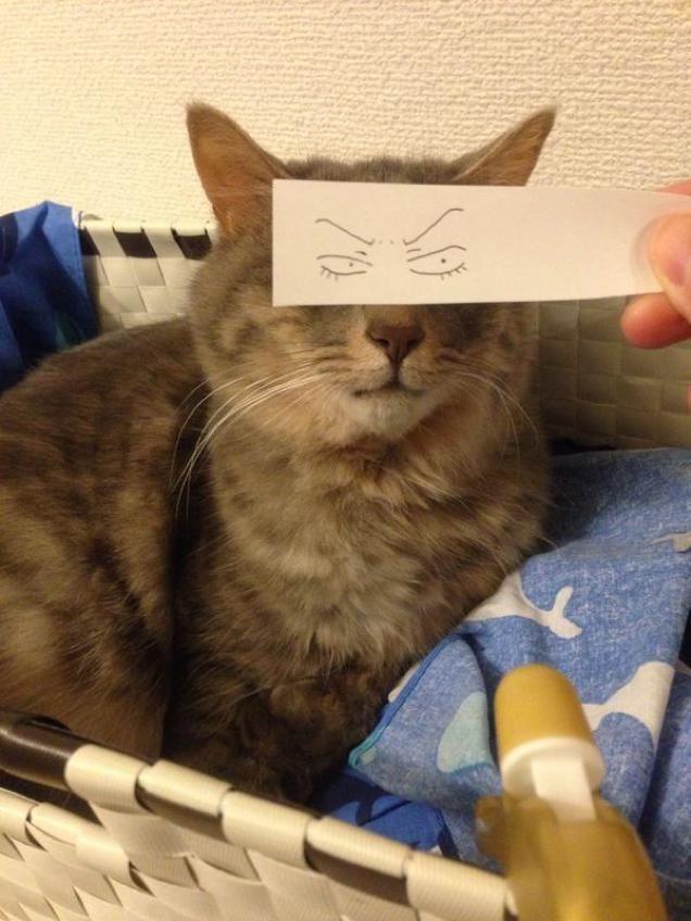 Фото котов с нарисованными на бумаге глазами