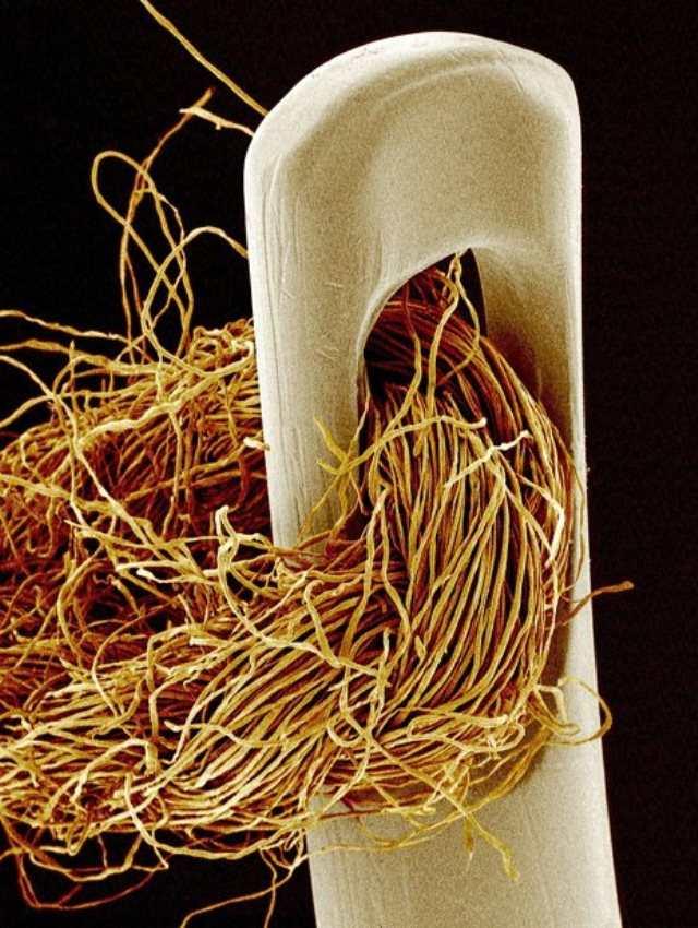 Привычные предметы под микроскопом