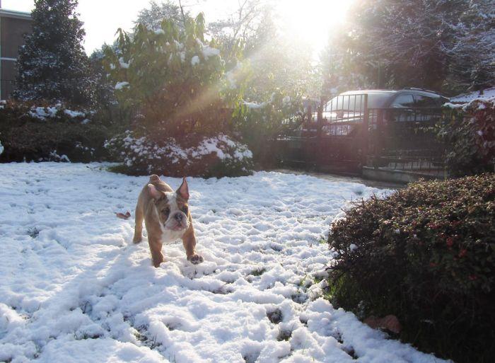 Первое знакомство со снегом
