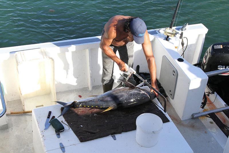Охота на акул мако и синих акул в Кейптауне