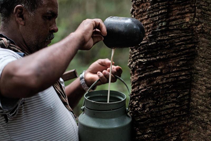 Производство презервативов  в лесах Бразилии