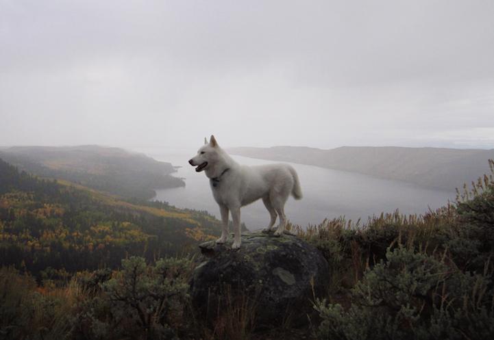 Пес исследует неизведанные просторы