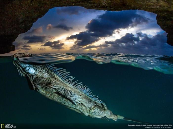 Лучшие фотографии National Geographic Photo Contest 2014