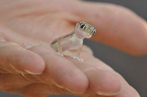 Рептилии тоже бывают милыми