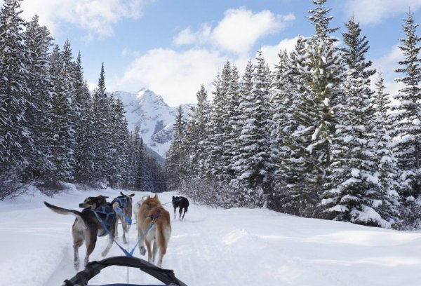 Прокатиться на собачьих упряжках по Аляске