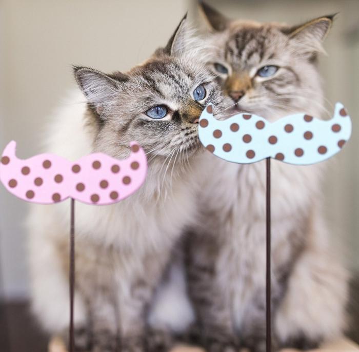 Кошки в маскарадных костюмах