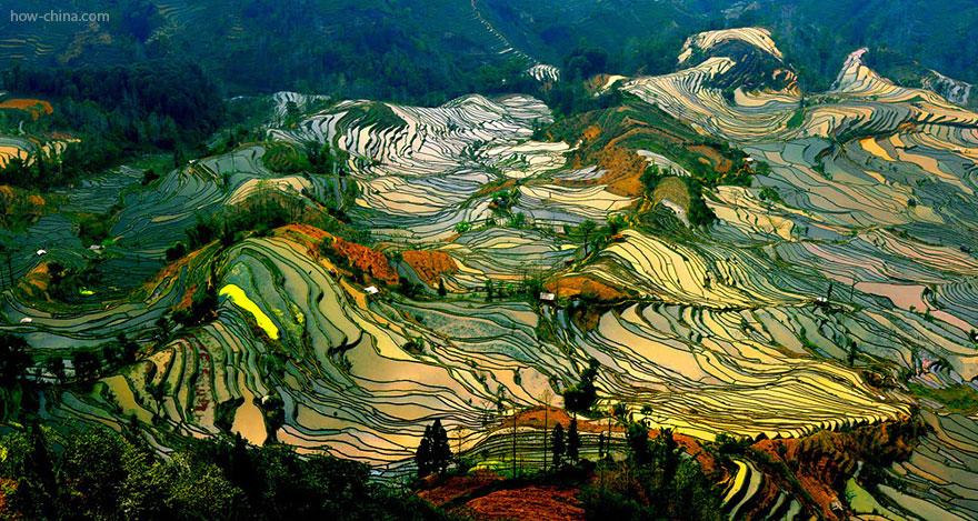 Фотографии рисовых террас