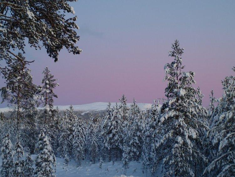 Красота зимнего леса