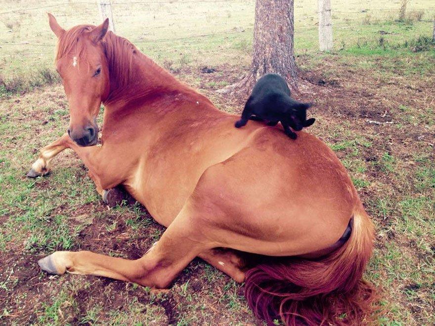 Кот Моррис обожает верховую езду