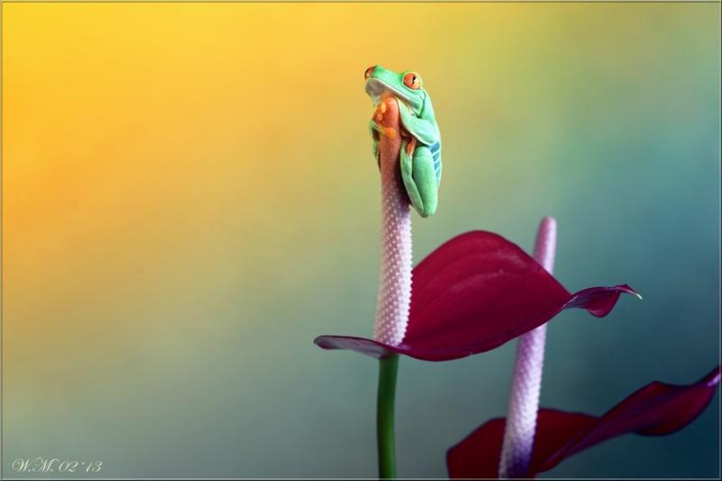 Завораживающие макрофотографии Уил Мийер