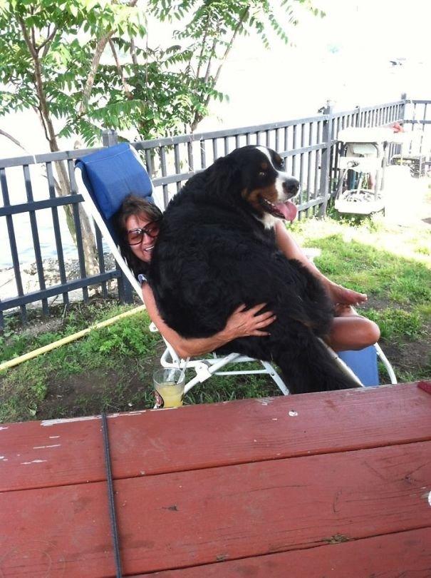 Большие собаки и их хозяева