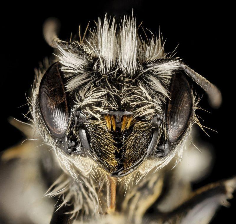 Лица насекомых крупным планом