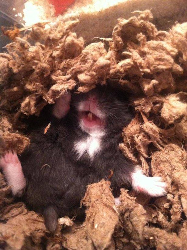 Животные спят с максимальным комфортом