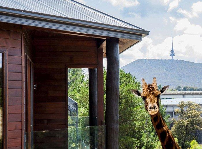 Отель с дикими животными в австралийском зоопарке