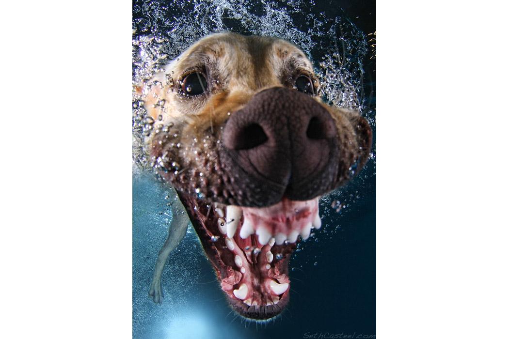 Собаки в бассейне
