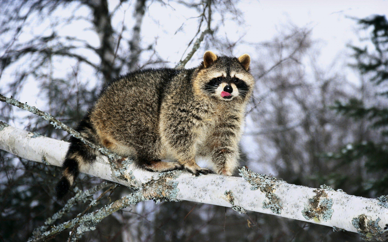 Животные в зимний период