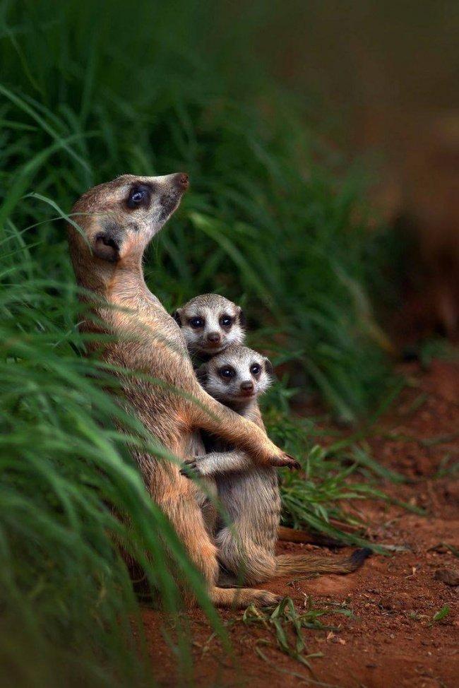 Животные и их семьи