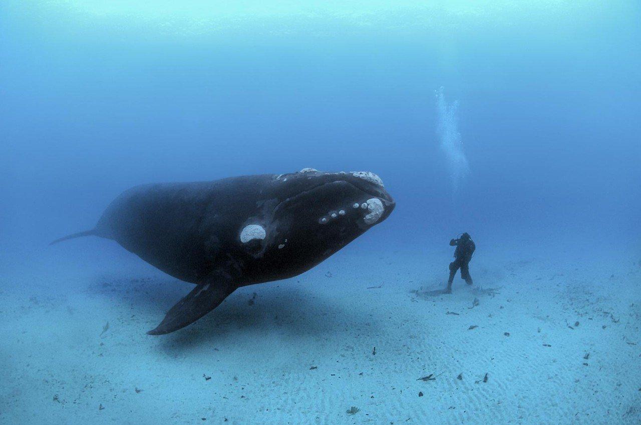 Синий кит животное
