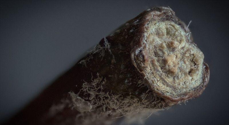 Повседневные объекты под микроскопом