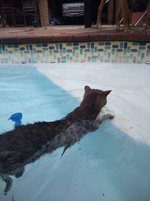 Коты, которые не боятся воды