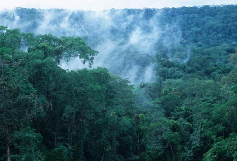 10 самых больших лесов на планете