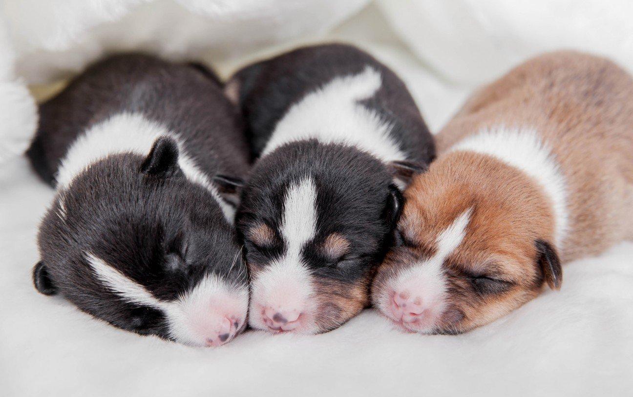 Datos interesantes sobre los perros.
