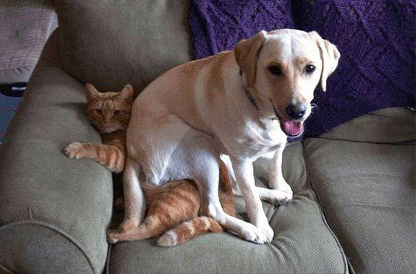 Собаки иногда устраивают пакости