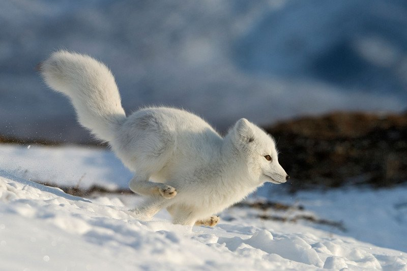 картинки милых маленьких животных
